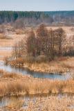 Nature de source Bois d'arbres se tenant dans l'eau pendant une inondation de ressort photographie stock