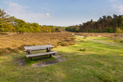 Nature de Veluwe près de Schaarsbergen Images stock