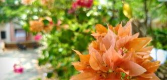 nature de vert de couleur de beaut? de fond les couleurs impressionnantes jaunes oranges vertes impressionnantes de fleurs rouges photo libre de droits