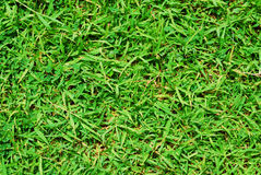 Nature de vert d'herbe Images libres de droits