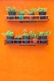Nature Decoration. Orange wall with plants on shelves Stock Image