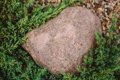 Nature. Decorative cobblestone on the lawn juniper Stock Photos