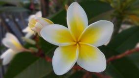 #nature del #flower fotos de archivo