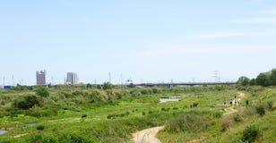 Nature in the Delta del Llobregat Stock Images
