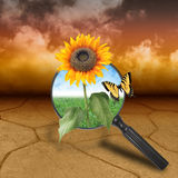 Nature Desert with Growing Flower of Hope. A dry brown desert landscape with clouds in the background. There is a magnifying glass with a sunflower growing out Royalty Free Stock Image