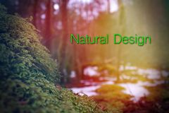 Nature Design Words Photography with Typography Lettering Royalty Free Stock Photos