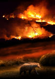 Nature destruction. Night-scene  representing a brown bear who runs away from a devastating fire which consumes its natural housing environment Stock Image