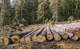 Nature destruction.Logging Royalty Free Stock Photography