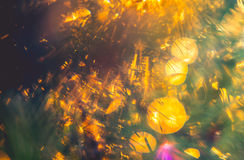 Nature detail beauty. Of bokeh at sunlight royalty free stock photo