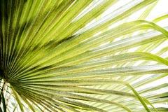 Bright palm leaf stock image