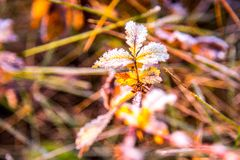 Nature detail, frosty plant leaves. Frosty wild meadow, nature background royalty free stock image