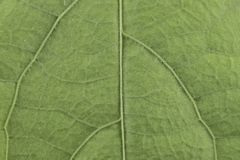 Nature detail green leaf background pattern texture board royalty free stock photos