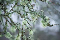 Nature detail tree branches with moss. Closeup macro photo Stock Image