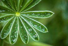 Nature details plant with raindrops Stock Image