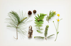 Nature details - tree bark, cones, marsh marigold flower, pine tree branches and fern leaf Stock Image