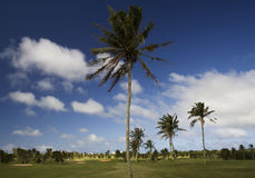 Nature dg-1. The palm trees sway as the wind passes Royalty Free Stock Image