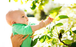 Nature discovery by baby. Child in green color clothes. Family walking outdoors at summer day Stock Photo