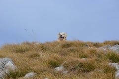Nature and dog. stock photos