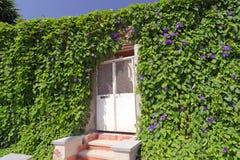 Nature door Royalty Free Stock Photos