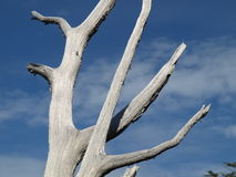 Nature: Dried white trunk under blue sky Stock Photos