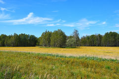 Nature in early autumn in Siberia. Royalty Free Stock Photos