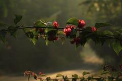 Nature. Early morning sunrise dew drops falling  Pilar Goa India Stock Photo