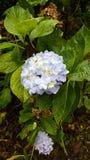 Nature Ecuador I. Flora cerca de Quito- Ecuador Royalty Free Stock Photos