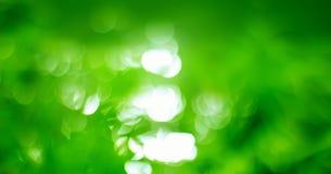 Nature effect blurred Bokeh Stock Image