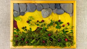 Nature elements on canvas background in wood picture frame. Autumn composition. Yellow leaves, stones, green moss, and berries. Time Lapse, stop motion, 4k stock video