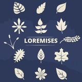 Nature elements collection - leaves and grass silhouettes set Royalty Free Stock Photo