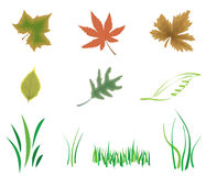 Nature elements. Illustration with nature elements: leaf, green grass Stock Photo