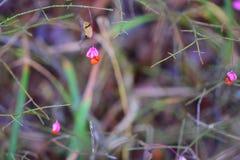 Nature en automne Photo stock