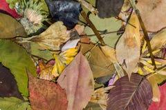 Nature en automne Image libre de droits