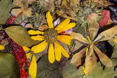 Nature en automne Photographie stock