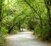 Nature en bois de chemin de traînée image stock