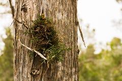 Nature en bois de texture images libres de droits