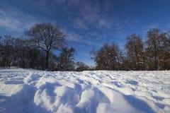 Nature en hiver Photos libres de droits