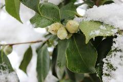 Nature en hiver Photos stock