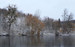 Nature en hiver Photo stock