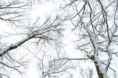 Nature en hiver Photographie stock