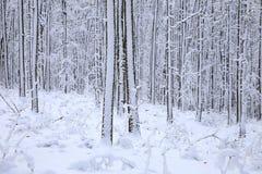Nature en hiver Photographie stock libre de droits