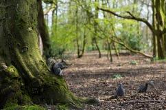 Nature en parc Images stock