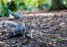 Nature en parc Photos stock
