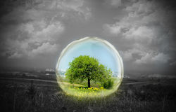 nature en verre dessous Image libre de droits
