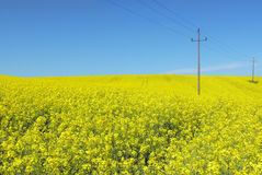 Nature & energy. Power line above yellow flowers Stock Image