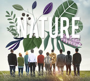 Nature Environment Green Earth Growth Natural Concept Stock Photo