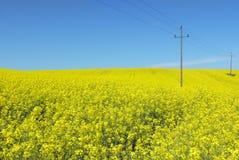 Nature et énergie. Ligne électrique au-dessus des fleurs jaunes Image stock