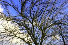 Nature et arbres pendant le premier ressort image libre de droits