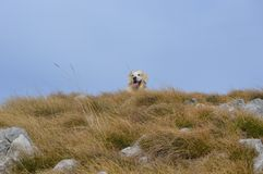 Nature et chien Photos stock