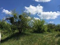 Nature et ciel Image libre de droits